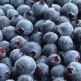 Organic Blueberries Punnet